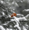 _DSF2377 (Vladimir Gazoukin) Tags: canada country close vladimirgazoukin forest winter trees bokeh midhurst snow