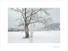 Las formas del invierno (E. Pardo) Tags: invierno winter nieve schnee snow árbol tree baum paisaje landscape landschaft gesäuse nationalpark parque nacional steiermark austria