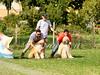 CoursingVillaverla2016w-044 (Jessica Sola - Overlook) Tags: dogs sighthounds afghanhounds greyhounds saluki barzoi italiangreyhounds irishwolfhounds lurecoursing lure race run dograces field greengrass