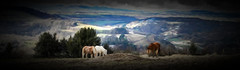 Horses with a view (Bobinstow2010) Tags: view horse landscape wales wyevalley painting topaz photoshop arty