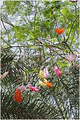 ras al khaimah 45 (beauty of all things) Tags: vae uae rasalkhaimah treesinthesky flora