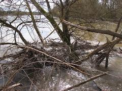 IMG_0937 (NICOB-) Tags: loire hiver nièvre bourgogne cher fleuve lumière arbres eau boisflottés embacles villechaud bannay crue
