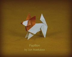 Papillon by Jun Maekawa... (Thomas Krapf Origami) Tags: jun meakawa papillon dog hund paper paperfolding origami papierfalten