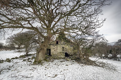 O'r Hafod i'r Hendre (Ffotograffiaeth Dylan Arnold Photography) Tags: derelict abandoned snow winter spring cold outside outdoors cottage farm ruin house trees bleak austere rural countryside wales snowdonia eryri uk seasons landscape wideangle sky clouds grey