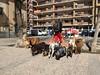 New jobs (Micheo) Tags: granada spain dogs perros cuidador paseante job empleo trabajo vida life street calles iphpne pets mascotas