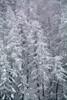 PIO_2884m (MILESI FEDERICO) Tags: milesi milesifederico piemonte piedmont alpi alpicozie altavallesusa altavaldisusa inmontagna inverno italia italy iamnikon ice wild winter neve nevicata visitpiedmont valsusa valdisusa valliolimpiche valledisusa sauzedicesana nikon nikond7100 nital natura nat nature cittàmetropolitanaditorino europa europe 2018 d7100 dettagli details paesaggio landscape fiocchi fiocchidineve