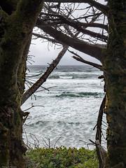 Ocean Beach #2 - Oregon (petechar) Tags: petechar charlesrpeterson landscape ocean lanecounty oregon highway101 water panasonicg9 leica1260mm ushighway101 sea coast sky tree