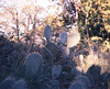 Cacti, Tuscany (nikolaijan) Tags: plaubelmakina 67 plaubel tuscany fuji provia100