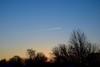 beautiful blue (ladybugdiscovery) Tags: blue sky morning dawn silhouette tree shrub
