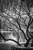 A Scene from the Gardens (MTD Photos) Tags: albuquerque bench blackandwhite branches duck garden mattdomonkos picnic pond tree