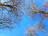 blue skies finally ! (photos4dreams) Tags: spaziergang walk feld wald wiese forest trees bäume photos4dreams p4d photos4dreamz