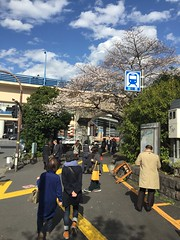 IMG_0113 (Coto Language Academy) Tags: iidabashi outside school cherryblossoms