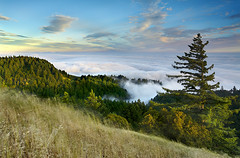Tamalpais Redwoods, Marin County [1200x791] - Patrick Smith (etnscreensaver) Tags: ifttt reddit landscape sky rock grass tamaplais marin fog redwood stratus wind travel vacation nature
