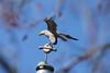 lake katherine. march 2018 (timp37) Tags: eagle statue flag pole lake katherine illinois march 2018 palos