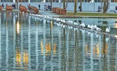 the way home (Claude@Munich) Tags: germany bavaria upperbavaria munich messestadtwest lake seagulls gulls waterbirds reflection stripes evening claudemunich bayern oberbayern münchen messemünchen messegeländemünchen messegelände messesee möwen spiegelung abends abend explore explore62180310