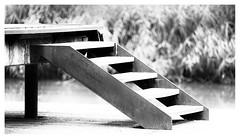 To a higher level (leo.roos) Tags: stairs staircase stairways trap steps trede noiretblanc a7rii meyerorestegor20040 m42 zebra 1966 day200 dayprime2017 dayprime dyxum challenge prime primes lens lenzen brandpuntsafstand focallength fl darosa leoroos