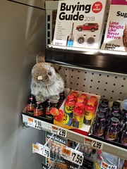 3-12-2018: Checking out the bunny at the checkout. Medford, MA