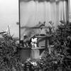 同志 (comrade) (Dinasty_Oomae) Tags: arco35 アルコ35 arco アルコ 白黒写真 白黒 monochrome blackandwhite blackwhite bw outdoor 東京都 東京 tokyo 江東区 kotoku 亀戸 kameido ネコ 猫 cat