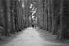 Park(t)our... (Gabi Wi) Tags: park bicycle fahrrad man mann dog hund path weg trees bäume colorless farblos walkingthedog gassigehen petzval58 monochrome