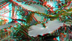 Greenhouse Blijdorp Rotterdam 3D (wim hoppenbrouwers) Tags: anaglyph stereo redcyan greenhouse blijdorp rotterdam 3d plants kas victoriareginahal victoriareginabassinkas hal