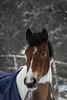 Horse (mellting) Tags: eskilstuna nikond500 platser sigma1506005063sport vilsta bloggad flickr instagram matsellting mellting nikon sverige sweden horse häst animal mammal