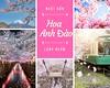 Dành trọn thanh xuân nhất định phải đến Nhật Bản ngắm hoa anh đào (fiditourhathanhbinh) Tags: fiditour dulịch nhậtbản dulịchnhậtbản