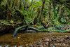 Somewhere in a temperate rain forest (Kadu Flyer) Tags: rainforest newzealand southisland stream decay treefern sonyrx100m4