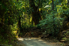 _02A0657 (cursty1) Tags: goa india asia plantation nature naturephotography landscape landscapephotography travel travelphotography wanderlust canon canonphotography jungle
