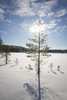Soljanen (Markus Heinonen Photography) Tags: seitseminen seitsemisen kansallispuisto nationalpark national park suo mire mosse lumi snow talvi winter landscape maisema luonto nature suomi finland saarisoljanen