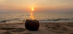 Coconut Beach - _TNY_3980P3 (Calle Söderberg) Tags: canon5dmkii canoneos5dmarkii canon tamron tamronafsp247028divcusd tamronsp2470mmf28divcusd 2470 panorama kolorautopanogiga sun sunset beach sea sky orange coconut sand gulfofthailand mercuryphuquocresortvillas kolor resort vietnam phuquoc f4 ocean water 5d2