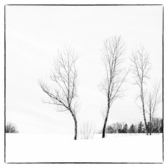 a wintery start into spring (B. Blue) Tags: mono pflanzen baum winter landschaft highkey landscape processing sw tree blackwhite bw monochrome schwarzweiss salzburg österreich at