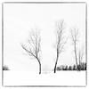 a wintery start into spring (B. Blue) Tags: mono pflanzen baum winter landschaft highkey landscape processing sw tree blackwhite bw monochrome schwarzweiss salzburg österreich at