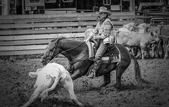 20030920_012 (dc2photo) Tags: ncha ocha ontario cowboy cutting equine horse qh quater sport western