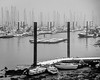 Misty Marina in the Snow (Rookie Phil) Tags: outdoor daytime winter wintry snowing lyingsnow snowstorm lowtide water river seaweed pontoons gulls seagulls boats dinghies ribs launches yachts motorboats cabincruisers cruisers outboards calmwater reflections masts mastsinthemist misty blizzard moody atmospheric england dartmouth kingswear darthavenmarina dart riverdart bw blackandwhite monochrome 2401200mmf40 d750 nikond750