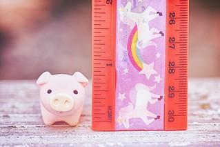 78/365 : Tiny Pig