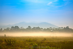 Rice field and fog with mountain background (Chanthaburi) (baddoguy) Tags: beauty in nature blue cloudscape color image copy space country road discovery field focus on foreground fog grass green idyllic journey landscape local landmark low morning mountain mystery no people outdoors photography plain plant rice cereal paddy rural scene silhouette sky thailand tranquility tree twilight vertical