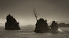 Persevere (LadyBMerritt) Tags: ocean inlet rocks tree storm rough weather water birds stormy