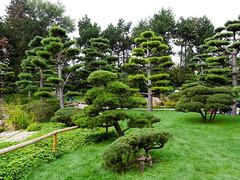 Düsseldorf - Nordpark - Japanischer Garten (gernotp) Tags: baum deutschland düsseldorf düsseldorfurlaub natur nordrheinwestfalen ort park pflanze urlaub grl5al grv4al