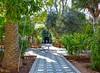 Bahia Palace Gardens (Nina_Ali) Tags: bahiapalacegardens morocco marrakech travelphotography nature 2018 ninaali february2018