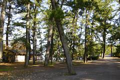 Japan 2017 Autumn_507 (wallacefsk) Tags: amanohashidate japan kyoto miyazu monju 京都 天橋立 宮津 文珠 日本 關西 miyazushi kyōtofu jp