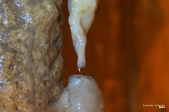 A drop of eternity... (Κώστας Καϊσίδης) Tags: stalactite stalagmite cave limestone limestonecave caveanemotripa pramanda tzoumerka epirus greece hellas