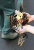 Papillons en fête, Québec, Canada - 5018 (rivai56) Tags: butterflies return celebration hamel garden center le retour de papillons en fête au centre jardin