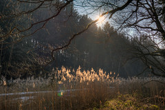 ufernah (wolf238) Tags: flus river mulde ufer ufergras
