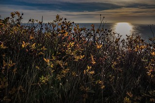 Autumn morning, Signal hill.