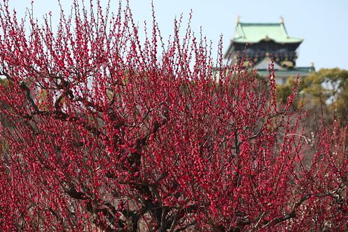 大阪城を背にして