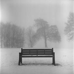 memorial bench (pho-Tony) Tags: kodakduaflex fujicolor reala iso 100 respooled 620 spool tetenal c41 kodak mediumformat waistlevel pseudotlr box camera film 6x6 square 6cmx6cm ttv throughtheviewfinder