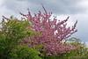 Frühlingsgefühle (Sockenhummel) Tags: kirschblüten wartenberg baumblüte frühling spring hanami baum bäume trees fuji x30 zierkirsche