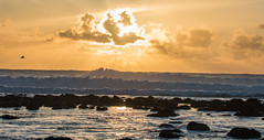 Waves at Sunset (Kristen Fletcher Photography) Tags: pacificgrove pacificocean sunset seagull rockyshore rockycoast coast coastline shore seashore ocean oceanwaves