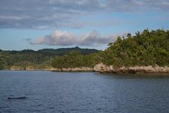 Flipper (pleymalex) Tags: kayak kayak4conservation beser bay raja ampat papua indonesia koh lanta flipper dolphin