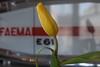 Espresso Bar (markus_langlotz) Tags: tulip tulpe blume flower blossom blüte bar espresso cafe faema e61 yellow red green grün gelb rot white weiss